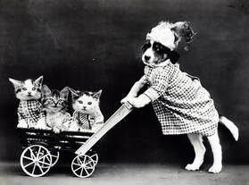 Kittens in a stroller being pushed by a Terrier
